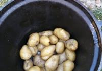 dzien-ziemniaka-3
