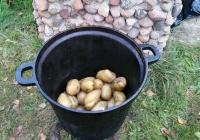 dzien-ziemniaka-5