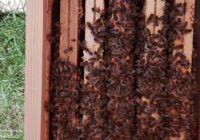 Pszczoły w MOW