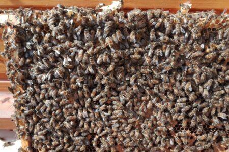 Pszczelarstwo w MOW